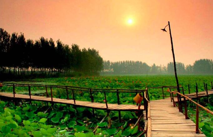 白洋淀荷花大观园 文化苑芦苇荡泛舟捡野鸭蛋 湿地栈道二日游