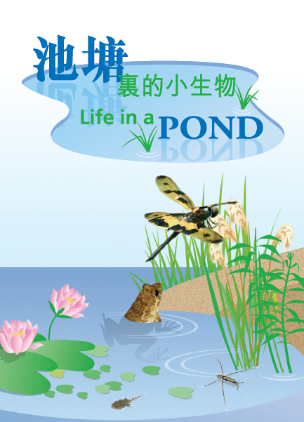 池塘小生物1.jpg