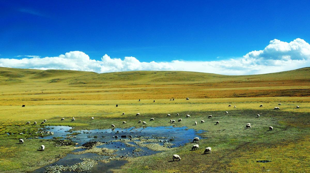 感受下4500米的海拔高度,过了那曲,离拉萨越来越近,藏北羌塘草原风光